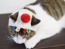 ねこ 帽子 オリンピック